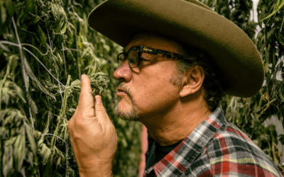 Cannabis business, Belushi and other stars become producers