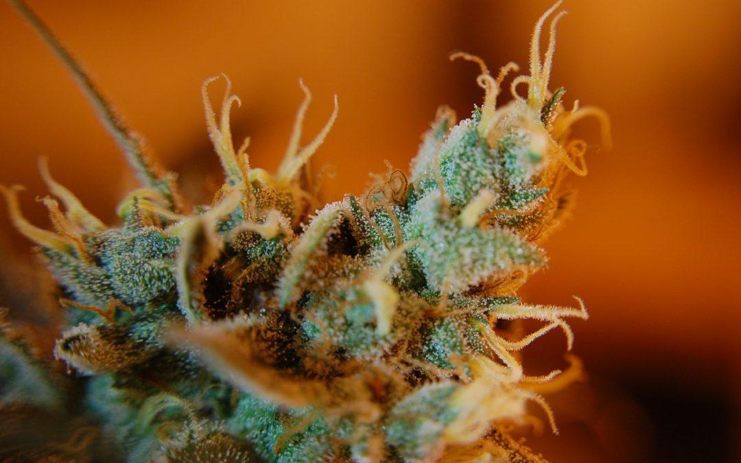 Cannabis (Thc 0,5%) legal again!